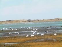 Ganga Lake ecology deteriorating - UB Post | Mo's APES Resources | Scoop.it