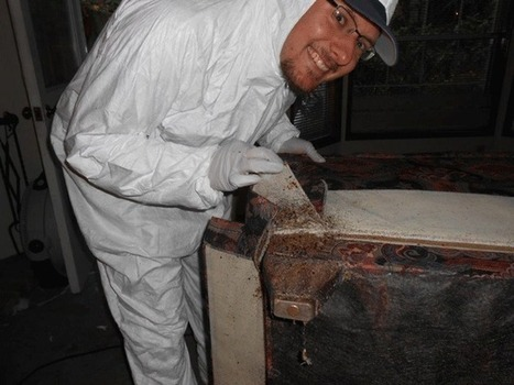 Kirkland business restores home infested with bedbugs, owner treated for bites ... - Kirkland Reporter | Bed Bugs | Scoop.it