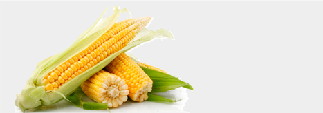 Maize Exporters In India - Balamurugan Traders | Maize export from India | Scoop.it