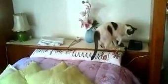 Insolite-Un chat qui répond au téléphone | Envie de se Marrer,Videos Humour, Image insolite,Blagues Marrantes | Envie de se Marrer | Scoop.it