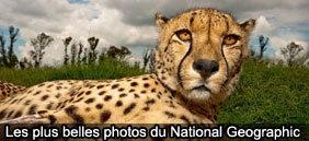 Nouveau : « les Tookets » - LaDépêche.fr | Monnaies complémentaires | Scoop.it