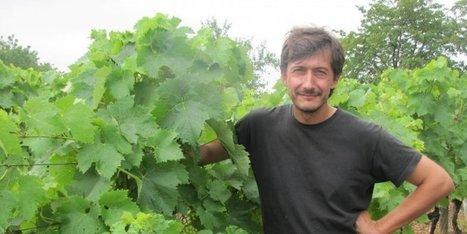 La fête dans les vignes | Adefa Charente | Scoop.it