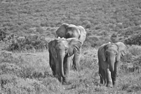 A productive trip for a group of students who went to South Africa for two weeks to aid with volunteering with animals, want to become involved read on | My Favorite internet Sites | Scoop.it