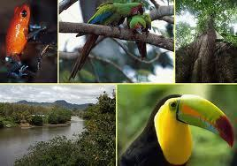 Biodiversity higher in the tropics, but species more likely to arise at higher latitudes | Forest | Scoop.it