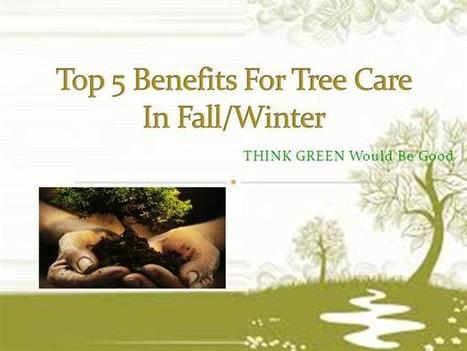 Top 5 benefits for tree care in fall or winter | tree services | Scoop.it