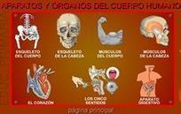 Aparatos y órganos del cuerpo humano - Fisiologia y Anatomia Humana (2º Bachillerato)   ESO - BACHILLERATO   Scoop.it