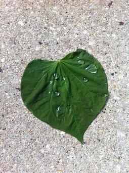 Compassion: Our First Instinct | Leadership & Behaviour | Scoop.it