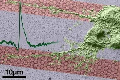 Des transistors en graphène pour la bioélectronique | 21st Century Innovative Technologies and Developments as also discoveries, curiosity ( insolite)... | Scoop.it