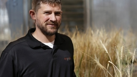 Gluten-free wheat quest undertaken by farmers | Gluten Freedom | Scoop.it