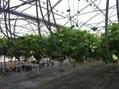 Le Périgord a désormais son propre salon des fruits et légumes - France Bleu | Végétarisme, alternative alimentaire | Scoop.it