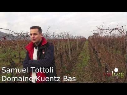 Alsace Grand Cru Eichberg | vinblog | vinblog | Scoop.it