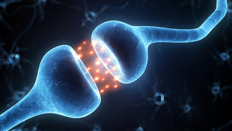 Does consciousness arise from quantum processes in the brain? | Open Mind & Open Heart | Scoop.it