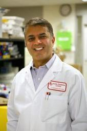 Joslin scientists find first human iPSC from patients with maturity onset diabetes of the young | diabetes and more | Scoop.it