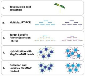 Development of a Multiplexed Bead-Based Suspension Array for the Detection and Discrimination of Pospiviroid Plant Pathogens | Plant virology and phytoplasmology | Scoop.it