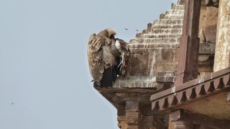 Viajar a India: Varanasi vía Orchha y Khajuraho | Aventura en India | Scoop.it