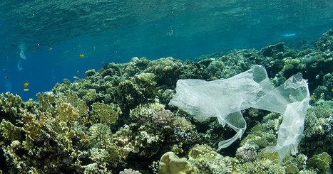 Le plastique biodégradable est une arnaque : il ne se décompose pas dans l'océan ! | Biodiversité & Relations Homme - Nature - Environnement : Un Scoop.it du Muséum de Toulouse | Scoop.it