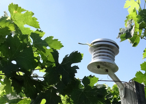 Adaptation à long terme de la viticulture au changement climatique | Le Vin et + encore | Scoop.it