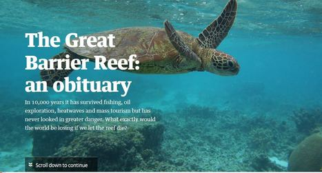 The Great Barrier Reef: an obituary | AP HUMAN GEOGRAPHY DIGITAL  STUDY: MIKE BUSARELLO | Scoop.it