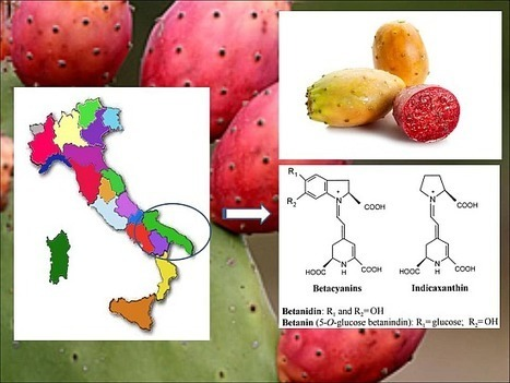 Betalains, Phenols and Antioxidant Capacity in Cactus Pear [Opuntia ficus-indica (L.) Mill.] Fruits from Apulia  (South Italy) Genotypes | plant cell genetics | Scoop.it