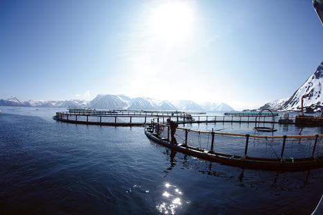 The Global Salmon Initiative (GSI) announces 100th farm achieves Aquaculture Stewardship Council (ASC) Certification | Aquaculture Directory | Aquaculture Directory | Scoop.it