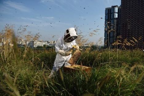 Sur les toits du centre commercial Beaugrenelle, les ruches livrent leur miel | Let me think about it | Scoop.it