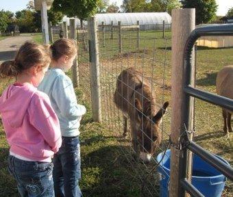 Visit to Wolcott Mills Farm Learning Center | In the Garden Online | Annie Haven | Haven Brand | Scoop.it