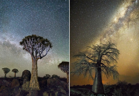 Diamond Nights: Africa's Oldest Trees Photographed Against Starry Night Skies by Beth Moon | As digitally seen ... | Scoop.it