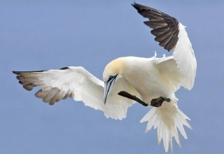 Hurricane Sandy's Impact on Fish and Wildlife | Wildlife News | Scoop.it