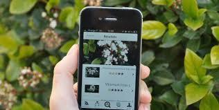 Pl@ntNet le Shazam des plantes: l'application smartphone qui identifie les végétaux | We are numerique [W.A.N] | Scoop.it