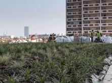 Les jardins suspendus de l'économie positive | Le Cercle Les Echos | Nature, urbanisme et citoyenneté | Scoop.it