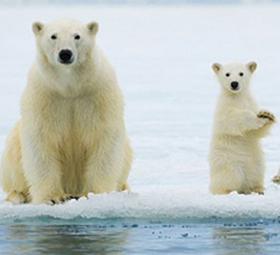#PacificEnvironment:U.N. Agency Adopts #PolarCode to Prevent #SeaPollution | Rescue our Ocean's & it's species from Man's Pollution! | Scoop.it