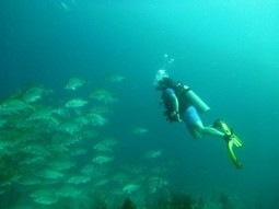 Best Locations to Enjoy Scuba Diving | Scuba Diving Adventures | Scoop.it