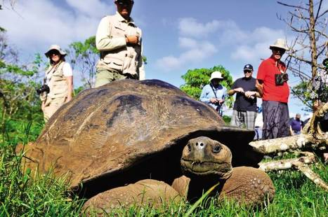 Top 5 things to know about the Galapagos Islands | Travel to Solomon Islands | Scoop.it