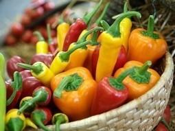 La Hongrie, pays sans OGM | Libérons le vivant ! | Scoop.it