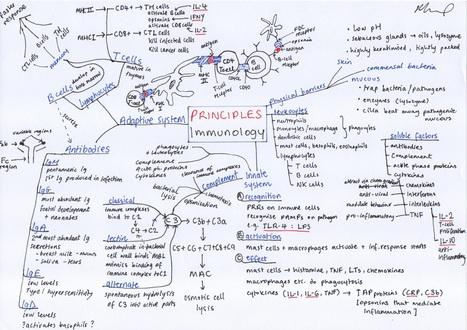 Immunology Principles Mindmap on Meducation   Mindyourorganisation   Scoop.it