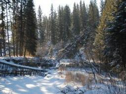 Saskatchewan's shrinking forests | Climate change challenges | Scoop.it