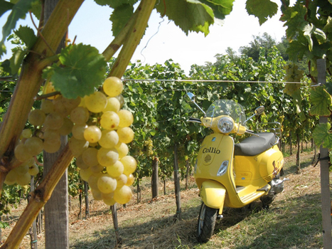 I grandi Vini del Collio | Vino al Vino | Scoop.it
