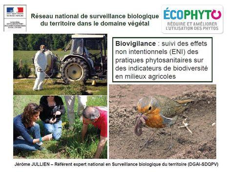 État des lieux de la biovigilance en France | EntomoNews | Scoop.it