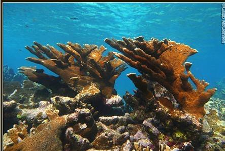 Glover's Reef Seascape, Belize - Wildlife Conservation Society | Belize in Social Media | Scoop.it