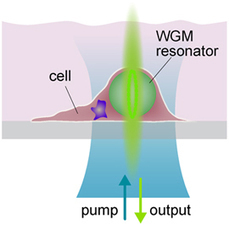 Tiny laser cells reveal cancer mechanisms | Amazing Science | Scoop.it