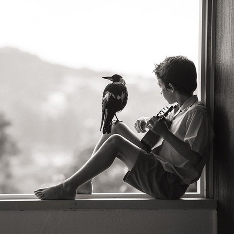 Touching Photos of a Family's Special Bond with the Magpie They Rescued   Simply beautiful   Scoop.it