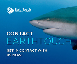 Shark 'selfies' are the new dumb internet trend | human-impact | Earth Touch News | All about water, the oceans, environmental issues | Scoop.it
