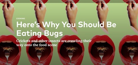 Crickets Are the 'Gateway Bug' for Eating Insects   Tasting Table   Entomophagy: Edible Insects and the Future of Food   Scoop.it