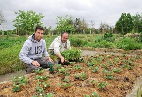 Muret. Un potager  dans l'entreprise | agriculture urbaine | Scoop.it