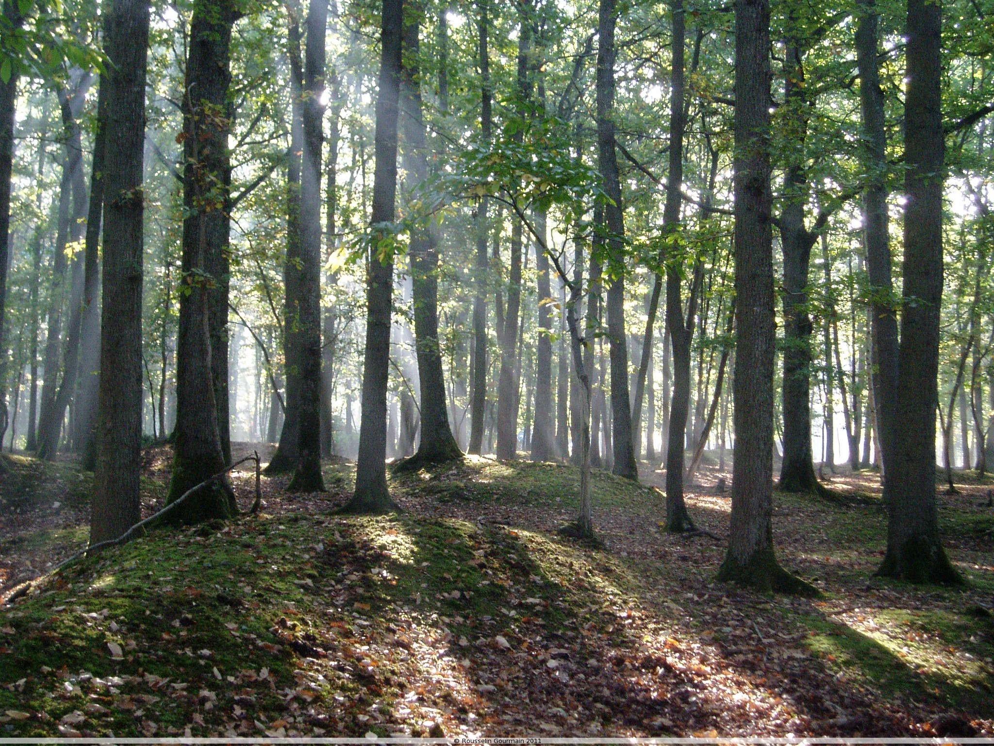 Actu de la production forestiere française par François ROUSSELIN