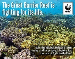 Industrialisation of the Great Barrier Reef denounced by World Heritage Committee | Conservation Biology, Genetics and Ecology | Scoop.it