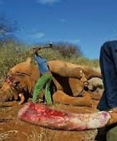 Poaching is threatening tourism development Tanzania placed under United Nations spotlight over ... | AP Human Geography | Scoop.it