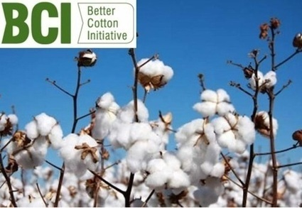 Making Sustainable Cotton Mainstream: The Better Cotton Initiative | Transparency and traceability of supply chains | Scoop.it