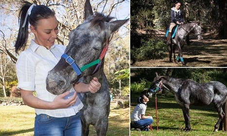 The inspirational story of a blind horse who learns to ride again | Animals and Other Stories | Scoop.it