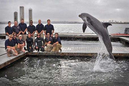 Dolphins persuade Navy trainers to dredge up 130-year-old torpedo | Strange days indeed... | Scoop.it